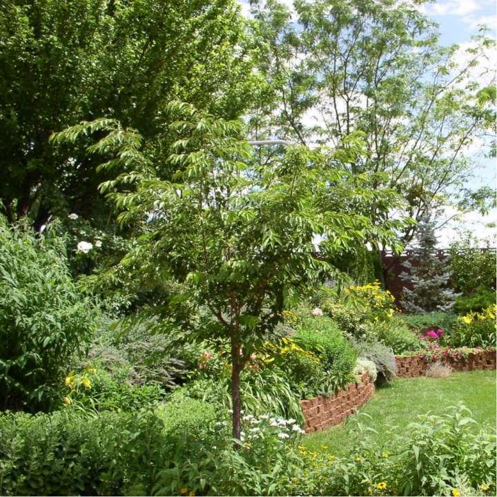Bomen en heesters - Groencentrum Hoogeveen