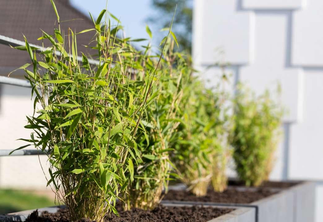 bamboe-groencentrum-hoogeveen