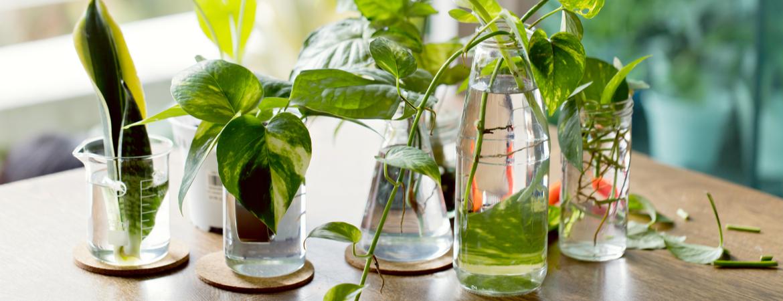 Kamerplanten stekken - Groencentrum Hoogeveen