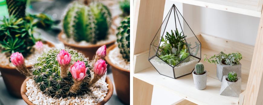 Cactussen en vetplanten assortiment