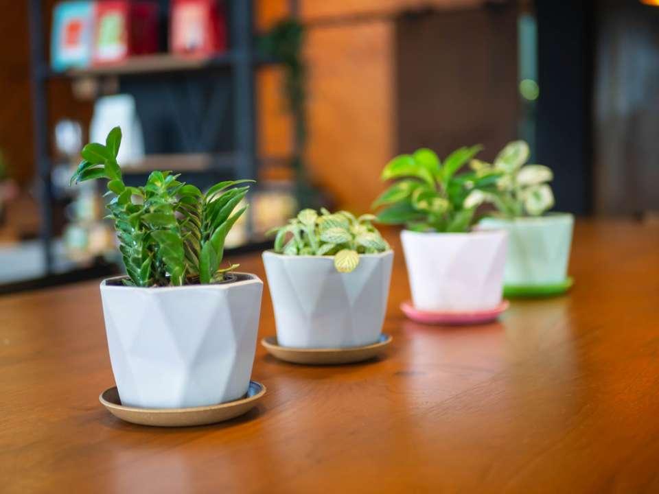 Mini kamerplanten - Groencentrum Hoogeveen