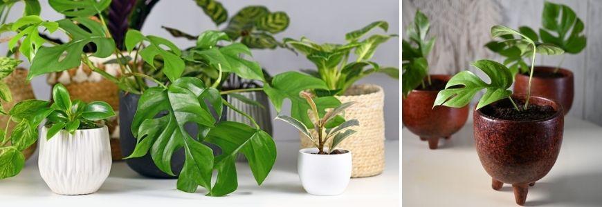 Mini kamerplantjes - Groencentrum Hoogeveen