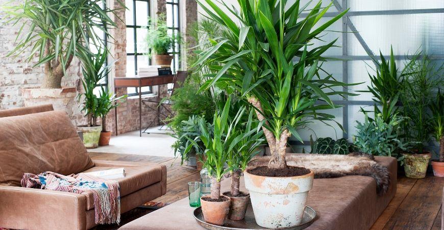 Groene kamerplanten_Groencentrum Hoogeveen