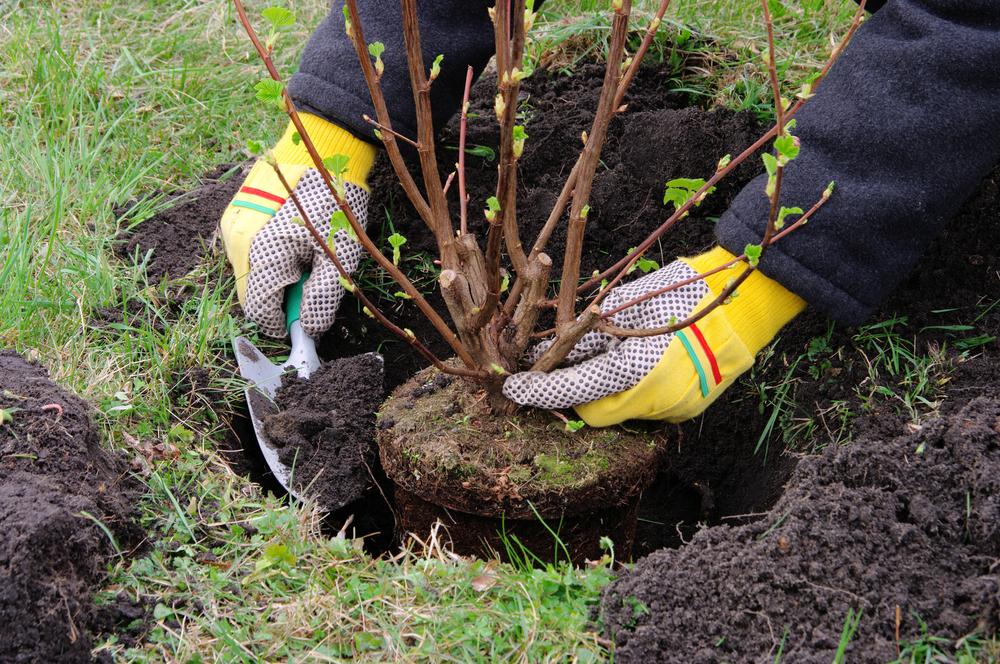 Plant een heester - Groencentrum Hoogeveen