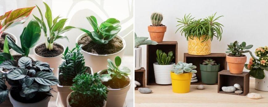 Terracotta plantenpotten - Groencentrum Hoogeveen