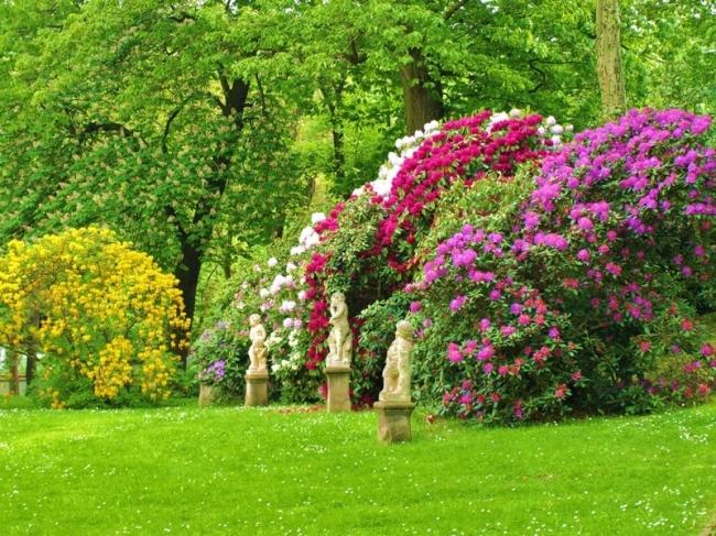 Coniferen kopen Drenthe