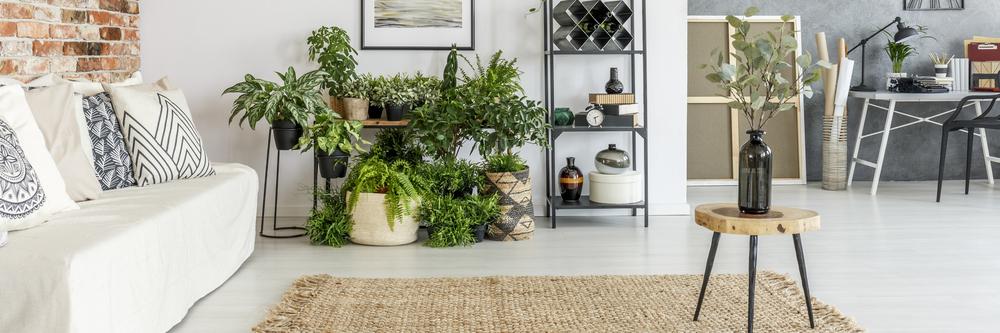 kamerplanten-kopen-drenthe-tuincentrum-hoogeveen