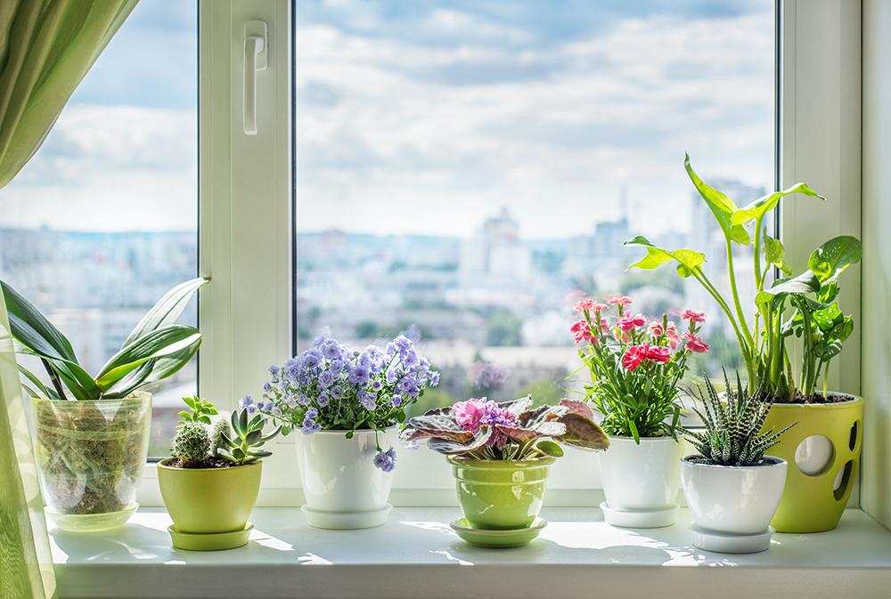 Bloeiende kamerplanten