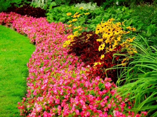 tuinplanten kopen drenthe